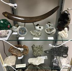 The Fossil Realm Store and Gallery is located at 60 Basaltic Rd. Visit us Saturdays 12 to or make an appointment. Cabinet Of Curiosities, Crystal Cluster, Malachite, Natural History, Gta, Fossils, Ontario, Minerals, Rainbow