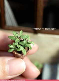 Easy Maintenance Houseplant #nationalhouseplantappreciationday #tinyplantsarecuter #pettydetails