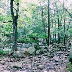 From a weekend camping trip to Harriman State Park #trees #wilderness #camping #familytime #cabinfamily #nature #potd #vsco