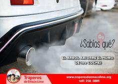 Sabias que un solo árbol absorbe el humo de 100 coches lo que les convierte en un elemento fundamental para la respiración de humanos y animales.🤔  #PiensaEnVerde  Comunícate con nosotros: ☎️(01) 258-3368 📞RPC: 957-424-062 📞RPM: 943-520-010 http://www.traperosdeemauslima.org/