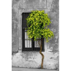 """Andover Mills Tree in Front of Window' Photographic Print on Wrapped Canvas Size: 18"""" H x 12"""" W x 1.5"""" D"""