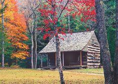 Carter Shields Cabin, Cades Cove, TN - ID: 5574892 © bill  sharpton
