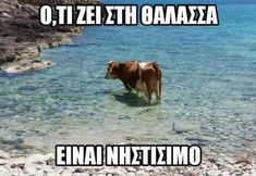 Funny Greek, Make Smile, Just For Fun, Funny Jokes, Funny Pictures, Lol, Humor, Memes, Face