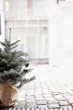 ♥ One day I want a real Christmas tree that I can plant ... or at least keep in a pot. :)
