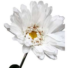 """White 42"""" Giant Gerbera Daisy Stem I have three of these"""