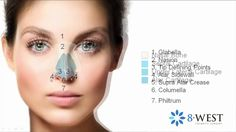 Rhinoplasty Cosmetic Roadmap of the Face   The Nose: Anatomy, Form & Fun...