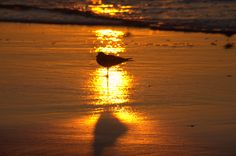 Light and shadow, seagull on the beach at sunrise. www.bethanylinnphotography.com