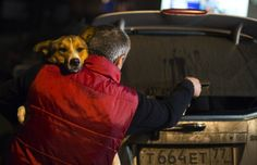 Animal activists smuggle dogs out of Sochi