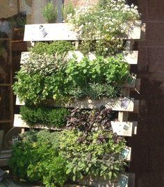 Pallet Herb Garden a Source of Natural Remedy   Pallet Furniture Plans