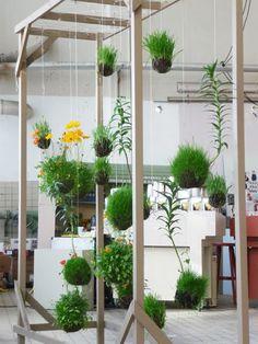 """Hanging indoor garden display from wooden frame: """"KOKEDAMA"""""""