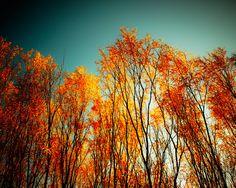 33% OFF, Autumn photo wall art red leaves forest fall foliage burnt orange paprika orange seasonal turquoise teal blue November. $20.00, via Etsy.
