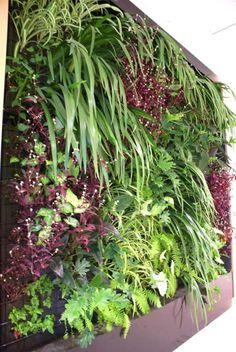 Leighton Contractors Vertical Garden