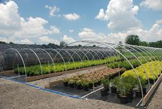 Rimol has over ten different types of greenhouses systems specially designed for certain applications. Find the right greenhouse for your growing needs. Tunnel Greenhouse, Greenhouse Ideas, Garden Nursery, Plant Nursery, Home Hydroponics, Garden Center Displays, Vegetable Garden Planning, Green Houses, Farms