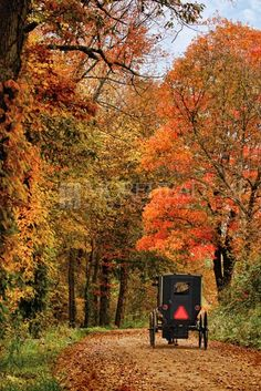 Fall Buggy, Amish Photos