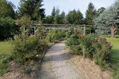 Parc de la Villa BURRUS - Les jardins - Jardin roseraie -