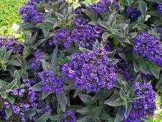 FOTO #6: Další krásné a voňavé květiny – G.cz Plants, Plant, Planets