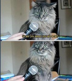Cat interview