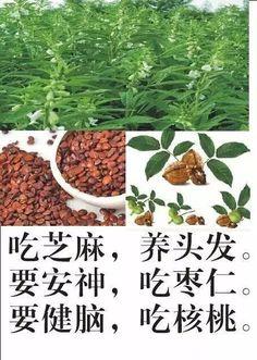 中医健康养生日记