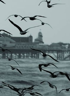 The setting for PayBack, Jaye Marie's soon to be published new mystery fiction novel. Flock Of Seagulls with Brighton Pier in the background Brighton Rock, Brighton England, Brighton And Hove, Brighton Photography, Great Places, Beautiful Places, British Seaside, British Isles, Costa