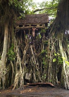 Architecture - Tree House - Banyan tree in Tanna Island, Vanuatu. Vanuatu, Cool Tree Houses, Unusual Homes, Photos Voyages, In The Tree, Resorts, The Good Place, Places To Go, Beautiful Places