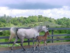 The love of a foal and mare