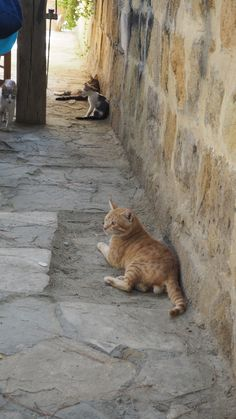 #cyprus #nicosia #никосия #кипр #котики #кипр_котики #cyprus_cats #фото_кипр #путешествие_кипр #рыжая_морда