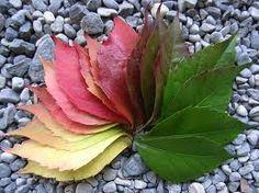 Leaf color wheel