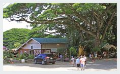 Tropical Farms - The Macadamia Nut Farm - Oahu Hawaii