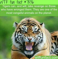 WTF Fun Facts is updated daily with interesting & funny random facts. We post about health, celebs/people, places, animals, history information and much more. New facts all day - every day! Wow Facts, Wtf Fun Facts, Funny Facts, Random Facts, Random Animal Facts, Bizarre Facts, Crazy Facts, Animals And Pets, Baby Animals