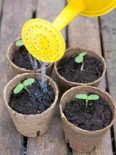 Water Pots with Fine Mist to Protect Seedlings