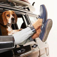 Este verano lánzate a la carretera con tu estilo #modaliaCasualStyle y no te olvides de meter en la maleta estos zapatos de #modaliaTommyHilfiger. Sin ellos pasarás un verano de perros!!
