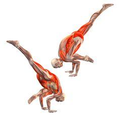 One-legged crane pose: right leg up - Eka Pada Bakasana - Yoga Poses | YOGA.com