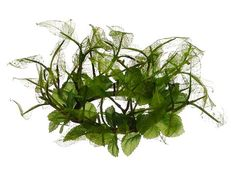 Silk Plants Direct Oak Leaf Candle Ring Centerpiece Pack of 12 ** This is an Amazon Affiliate link. Read more reviews of the product by visiting the link on the image.