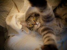#partiucama #boanoite #meow