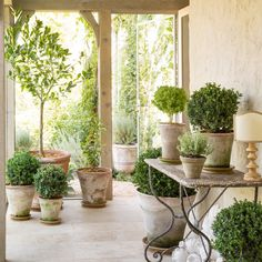 Patina Farm via The Creeping Fig- Perfect example of what you can do with plants in a room- The boxwoods are the stars in Campo de' Fiori pots Formal Garden Design, Patina Farm, Provence Style, Garden Pots, Boxwood Garden, Topiary Garden, Garden Table, Terrace Garden, Garden Inspiration