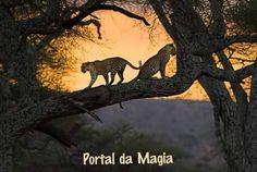 Portal da Magia: Não há razões para você aceitar uma vida conquista...