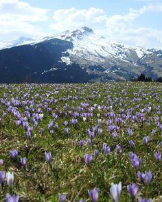 Spring Fever, Mount Rainier, Seasons, Mountains, Travel, Instagram, Switzerland, Viajes, Seasons Of The Year