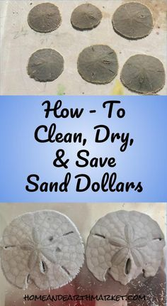 Exceptional Cleaning Tips hacks are offered on our site. Check it out and you wont be sorry you did. Deep Cleaning Tips, House Cleaning Tips, Cleaning Hacks, Seashell Crafts, Beach Crafts, Seashell Projects, Seashell Art, Diy Crafts, All You Need Is