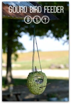 Homemade Gourd Bird Feeder DIY