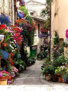Spello flower festival ~ Umbria, Italy- This is one thing that I loved doing when walking down the streets of Citta Di Castelo, Italy. Looking at all the beautiful flowers. Can I move to Italy? Beautiful Streets, Beautiful Gardens, Beautiful Flowers, Beautiful Places, Beautiful Pictures, Gorgeous Gorgeous, Beautiful Beautiful, Amazing Places, Wonderful Places