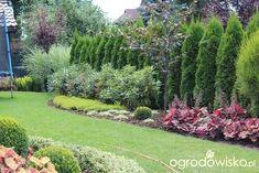 Landscaping Berm Ideas, Arborvitae Landscaping, Privacy Landscaping, Evergreen Landscape, Thuja, Garden Yard Ideas, Garden Landscape Design, Plantar, Dream Garden