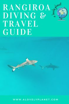 A guide to diving in Rangiroa, French Polynesia. The best dive spots, companies and more. #diving #FrenchPolynesia #Rangiroa #Tiputa Pass #RangiroaDiving