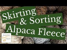 Skirting & Sorting Alpaca Fleece - YouTube