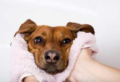 10 Ways to Stop Fleas from Biting Your Dog   petMD