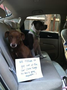 Dog Shaming features the most hilarious, most shameful, and never-before-seen doggie misdeeds. Join us by sharing in the shaming and laughing as Dog Shaming reminds us that unconditional love goes both ways. Cute Funny Dogs, Silly Dogs, Funny Dog Memes, Funny Animal Memes, Cute Funny Animals, Funny Animal Pictures, Cute Pictures, Animal Humor, Dog Pictures