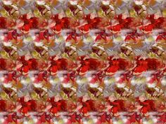 Stereograms are 3D images hidden within another picture.   In order to view the 3-D images, simply stare at the picture until the image starts to take shape.