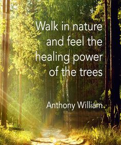 Walk in nature and feel the power of the tree. - Anthony William