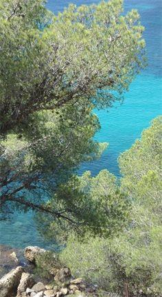 Activité sous marine, découverte des fonds marins avec l'association Association Initiatives et Education de la Jeunesse à l'Environnement, AIEJ, plongée sous marine, Provence - www.calanques.parcnational.fr