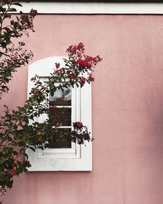 Pink wall #color #flowers