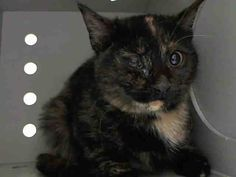 Pulled (Unknown Rescue)  NYC ** Beautiful Kitten **TO BE DESTROYED 02/25/15 ** INO **.Not Much Info on this Beautiful Kitten & don't understand the medical eval. ID #A1028414. Female tortie about 5 MONTHS old. OWNER SUR reason stated was STRAY. I came in with Group/Litter #K15-004596. NH ONLY https://www.facebook.com/nycurgentcats/photos/a.960362520648402.1073742604.220724831278845/960362583981729/?type=3&theater